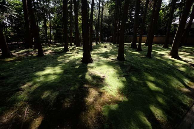 唐招提寺内にある御廟付近の林と苔