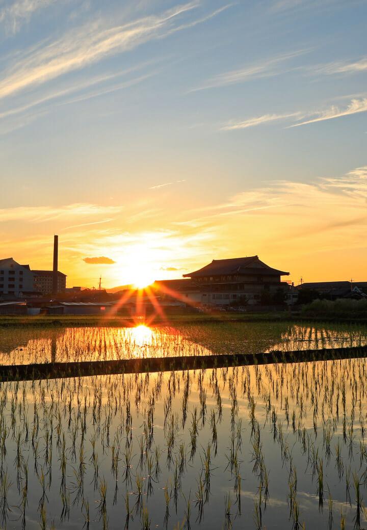 神殿北側・水田<br>夕日を映す水鏡