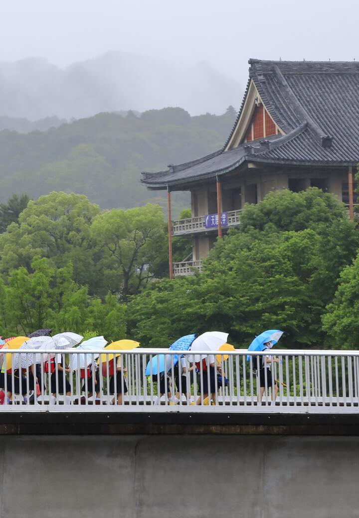 神殿南側・陸橋<br>梅雨空に咲く傘の花
