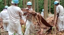第10回「インターナショナルひのきしん隊」には、10カ国・地域から140人が参加した(22日、奈良県御杖村の蛇谷山で)