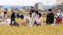 はるえ様と大亮様ご夫妻は、たわわに実った稲を刈り取られた(10月22日、天理高農事部杣之内農場で)