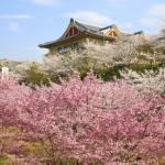 oyasatonoshiki-shashinten2021_03